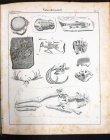 systematische-bildergalerie-zur-allg-dt-real-encyclopaedie-um-1830-m-vielen-lithos.13